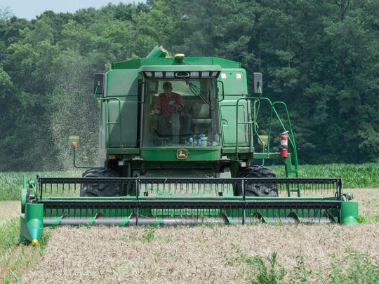 A combine operator harvests winter wheat from a field on Delmarva.