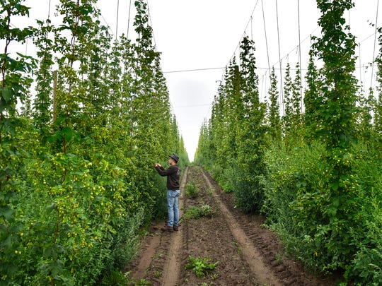 Mighty Axe Hops in Foley won a GSDC I-Award last year for its state-of-the-art hops facility and industry leadership.