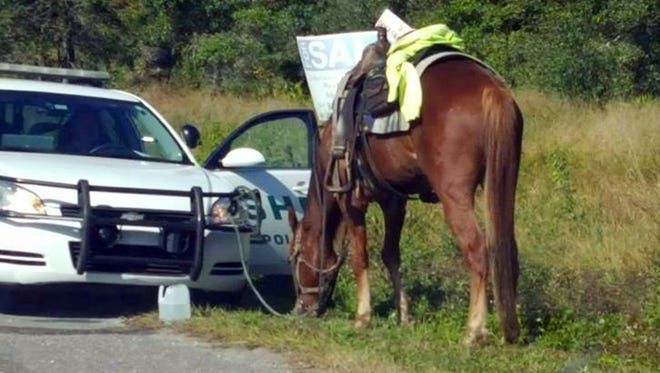 This photo made available by Diane Dodge shows a horse tied to a Polk County Sheriff Office cruiser on Nov.2, 2017, in Lakeland, Fla. Donna Byrne, 53, was charged with riding the horse down a busy Florida highway while intoxicated. She is also charged with animal neglect.