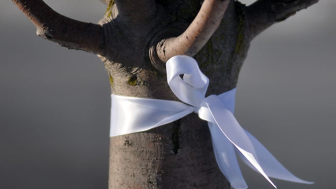 The trees at Kent Lake School have white ribbons tied onto them.
