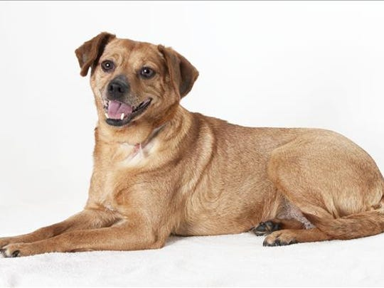 Cookie, 9-year-old female terrier mix dog. No. 98511.