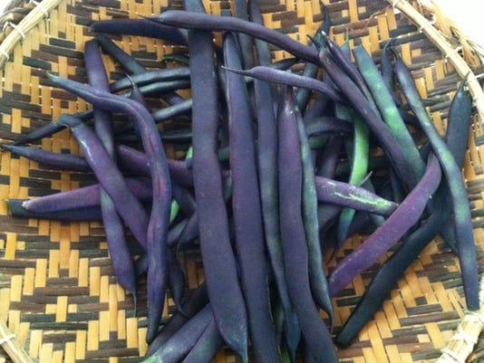 'Kew Blue' pole beans