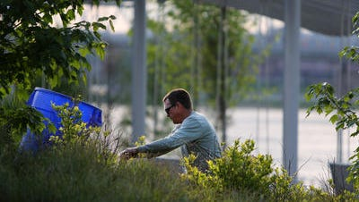 Jay Swanson with Cincinnati Parks works in the plant and flower gardens at Downtown's Smale Riverfront Park.