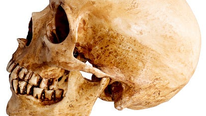 Stock image of a skull.