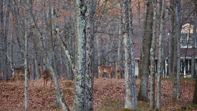 The solution to fighting hunger in Pennsylvania roams wild just beyond our doorsteps. Last year, hunters donated 97,000 pounds of venison through Hunters Sharing the Harvest.