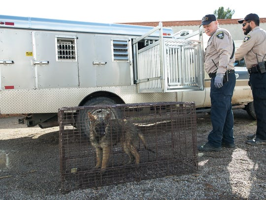 Doña Ana County Animal Control officers Jim Snow, left,