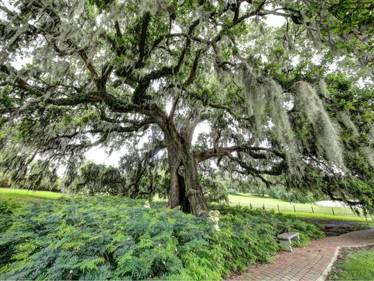 This historic oak tree is a focal point of the magnificent