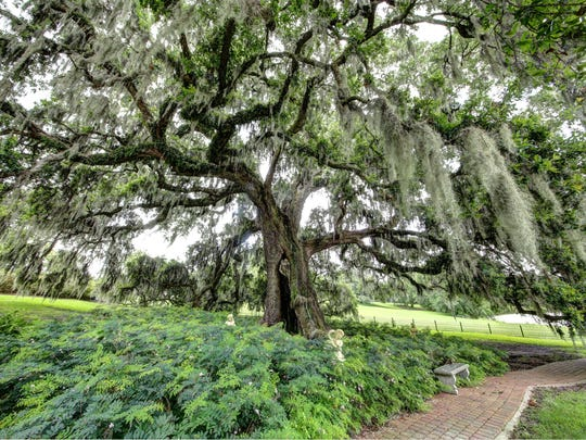 This historic oak tree is a focal point of the magnificent property.