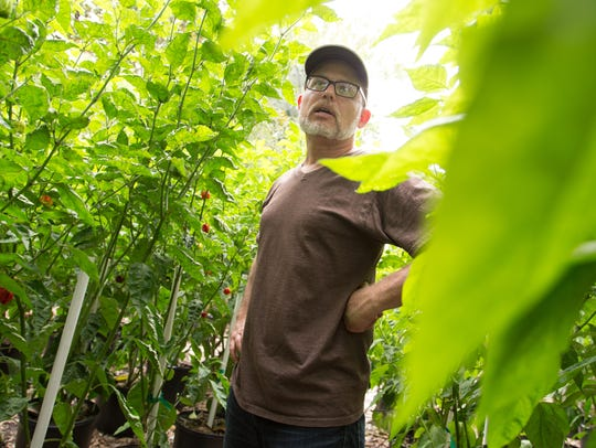 Troy Primeaux looks over his pepper plants growing