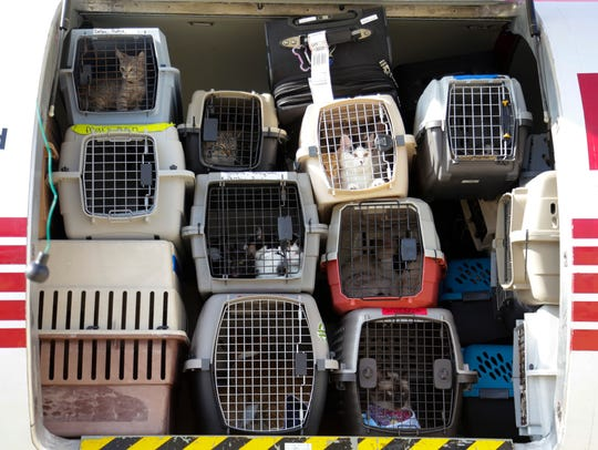 Cats displaced after recent floods sit in carriers