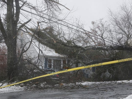 A large tree rests on power lines and a house on Iroquois