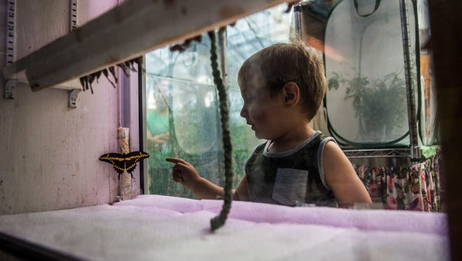 Mateo Morgades, 2, points at a giant swallowtail butterfly that just emerged from its chrysalis at the Butterfly Estates in Fort Myers on Wednesday, May 30, 2018.