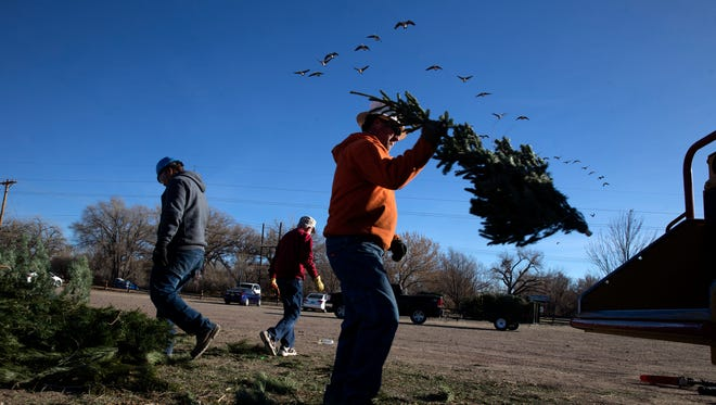 At right, Ryan Matney, arborist with the city of Farmington's Parks, Recreation and Cultural Affairs, puts a tree in to a wood chipper on Thursday at Berg Park.