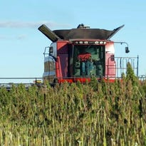 Industrial hemp production will have positive impact on Wisconsin's economy | Column