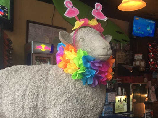 636670070613695546-Rainbow-Sheep.JPG