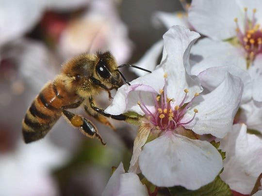 Pollinators are essential, including bees, wasps, ants, butterflies, moths, flies, beetles, hummingbirds, birds and bats.
