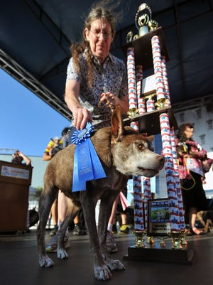 Quasi Modo is presented with a first place prize and trophy after winning the World's Ugliest Dog competition in 2015.