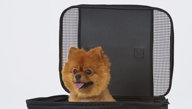 A file photo of a dog in a Southwest Airlines' pet carrier.