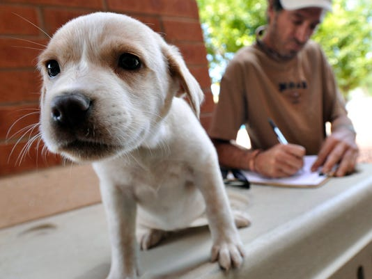 635853605330948421-FTC0810-ll-Causes-A-Puppy-s-Voice18-1-.jpg