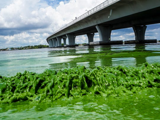 Water full of algae laps along the Sewell's Point shore