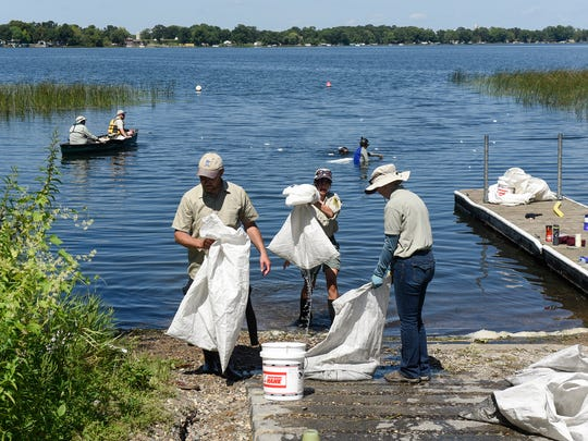 Minnesota Department of Natural Resources specialists remove bags filled with starry stonewort Wednesday, Aug. 23, from an area near the public acess at Grand Lake near Rockville.