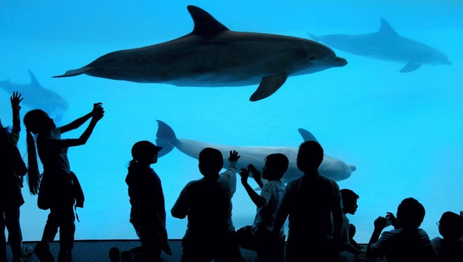Students from Rosita Valley Elementary School in Eagle Pass view the dolphin exhibit from the underwater viewing area at the Texas State Aquarium.