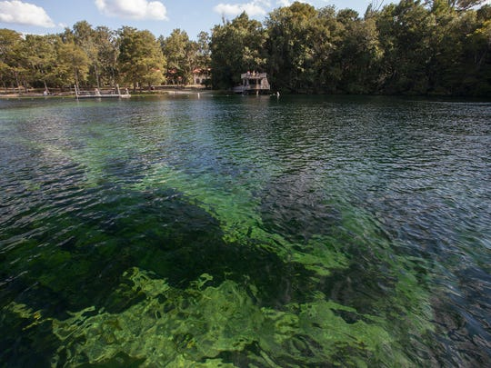 Waters in swimming area of Wakulla Springs State Park.