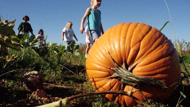 Pumpkins smaller and fewer this year in Missouri