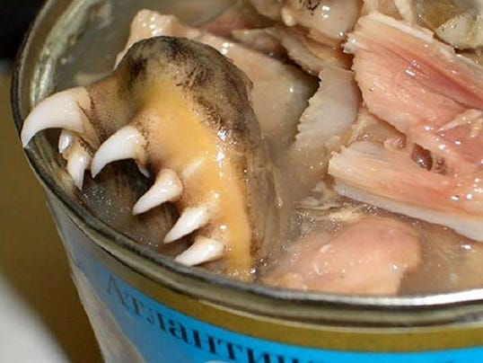 5-herring_englishrussiadotcom