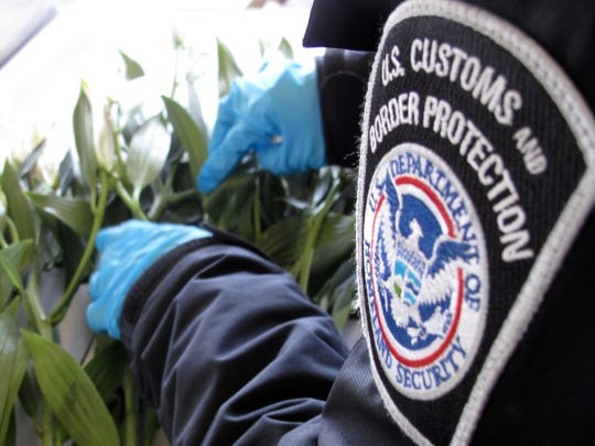 U.S. Customs and Border Protection agriculture specialists working at El Paso area ports of entry are busy this week making sure that personal and commercial importations of Mother's Day flowers are free from insects, pests and diseases that could harm the agricultural and floral industries of the United States.