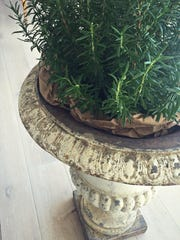 A painted distressed iron urn holds a rosemary bush.