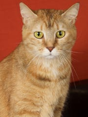 Paprika is available for adoption at 952 W. Melody
