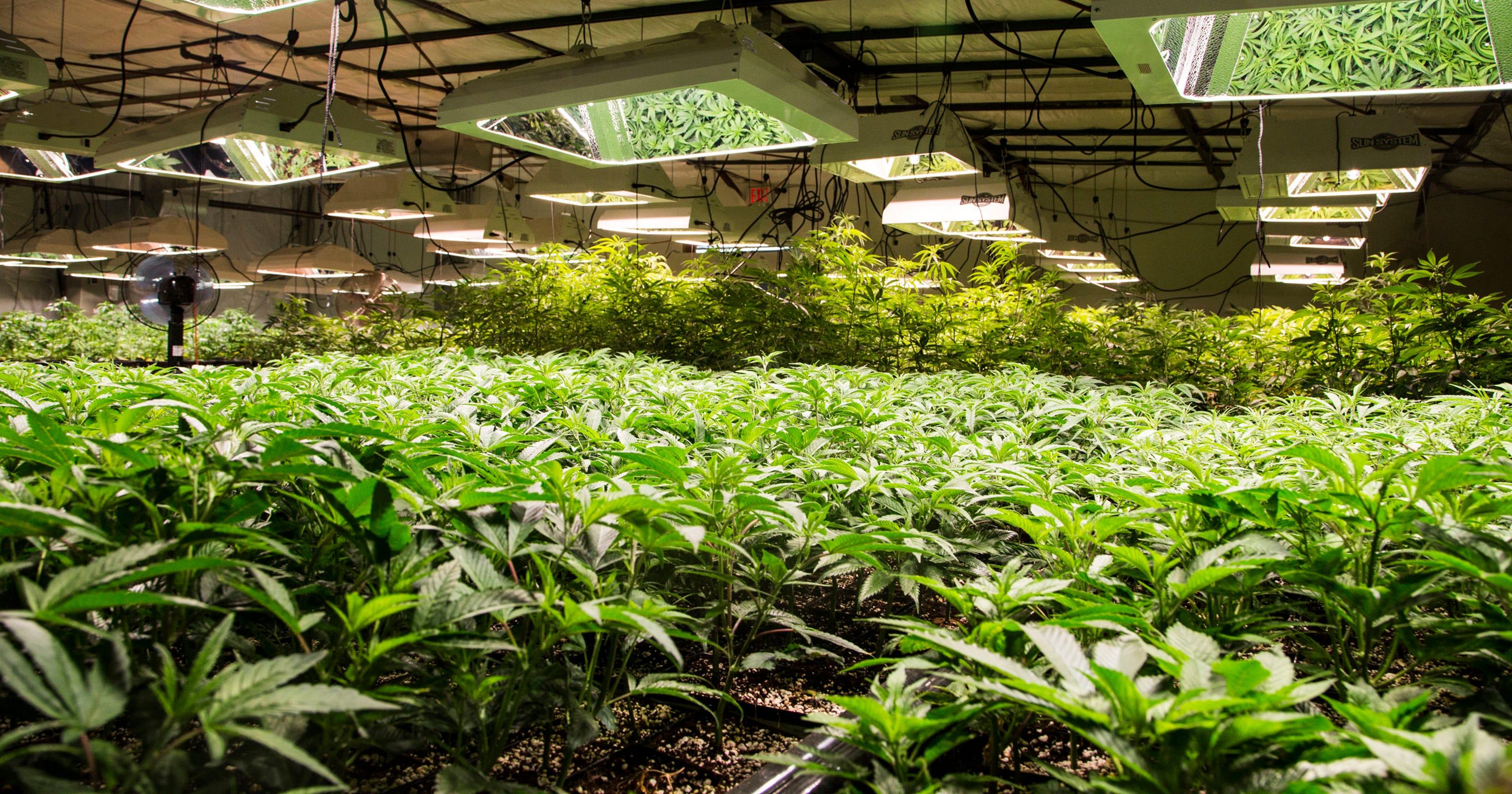 AZ Supreme Court allows medical marijuana on probation