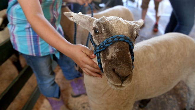 The81st annual Marion County Lamb & Wool Show is set for June 2 at Turner Elementary School.