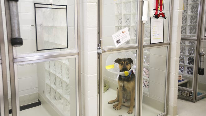 Three-year-old German shepherd mix Memphis in a kennel at the Marion County Dog Shelter on Tuesday, Aug. 8, 2017.