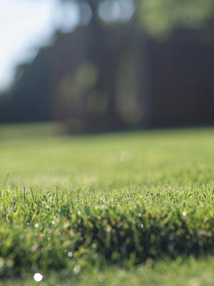 After rejuvenating or establishing a new lawn, follow the correct regimen of watering, fertilizing and mowing.