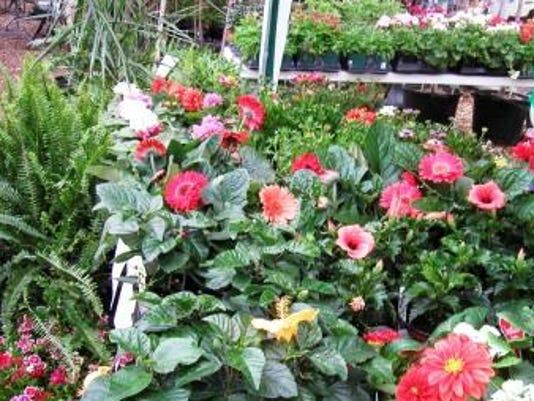 635552222505926855-bloomin-on-bricks
