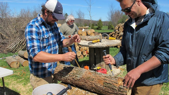 Mushroom growers Andy Bojanowski, left, and Nick Laskovski inoculate logs with shiitake spawn at Eddy Farm in Middlebury. The farm hosted the sixth annual Shiitakepalooza on Saturday at which volunteers helped mushroom growers inoculate logs that will eventually sprout shiitake mushrooms that can bring in $16 to $20 a pound.