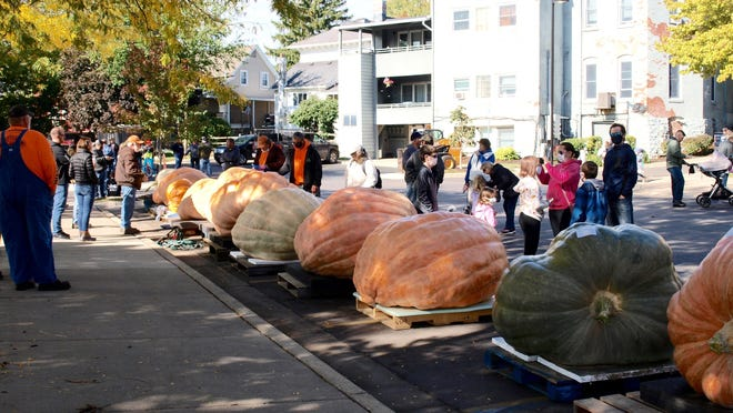 Some of the 20 giant pumpkins that were entered in the Pumpkin Palooza weigh-off contest are pictured Saturday.