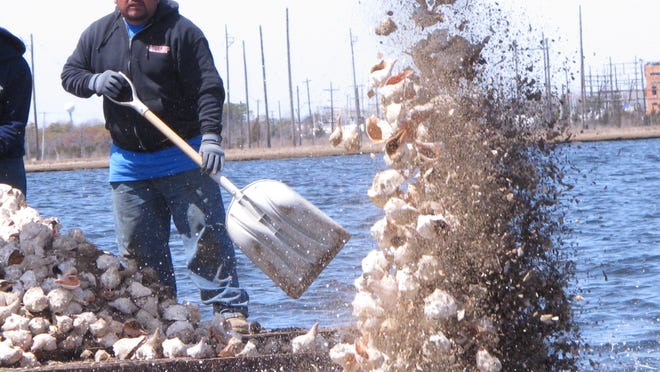 A hydraulic shovel and a worker with a hand-held shovel dump whelk shells into Barnegat Bay in Berkeley Township as part of a project to re-establish an oyster colony in the bay.