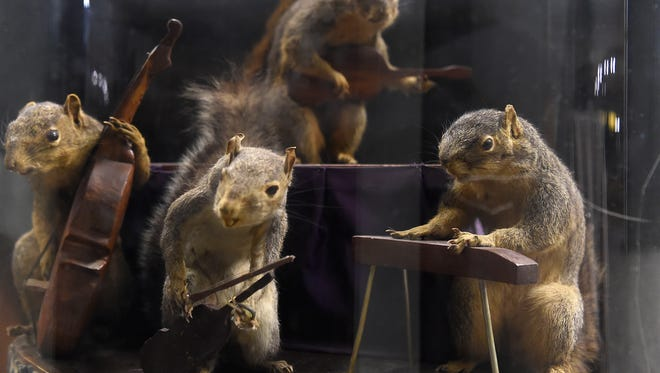 Hank Williams shot a bunch of squirrels 60+ years ago. These were taxidermied and posed with tiny wooden instruments to resemble Williams and his band the Drifting Cowboys.  items from the Country Music Hall of Fame and Museum archives and displays. Tuesday March 14, 2017, in Nashville, TN