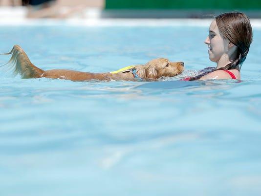Dog Swim Get Out