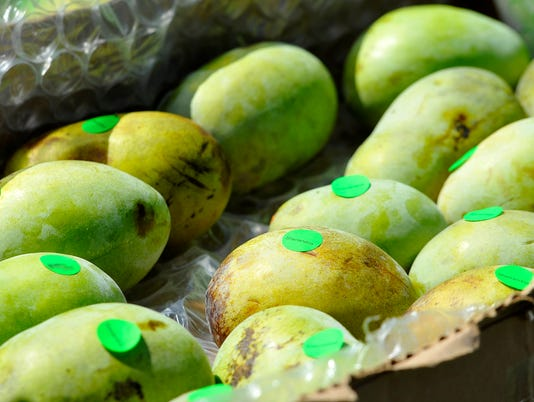 Hundreds turn out to try native fruit