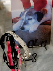 These collars and portrait by her friend, Beverly, are a reminder of Jessie, Stylemaker Lisa W. Jones's rescue dog that passed away.   March 21, 2017