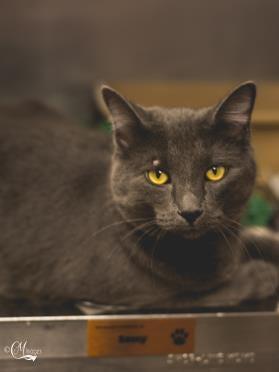 Rescue cat of the week: Meeko