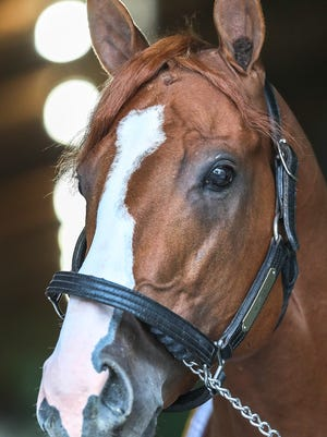 Triple Crown winner Justify looks out of his barn on Sunday morning after winning the Belmont Stakes on Saturday evening.June 10, 2018