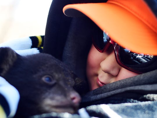 Ayden Zeigler-Kohler snuggles with a bear cub in Sproul State Forrest in Clinton County Thursday, March 9, 2017. The Pennsylvania Game Commission was checking on the cub's den as part of a long-term study, and invited Ayden along once they heard his story and how much he loved the outdoors.