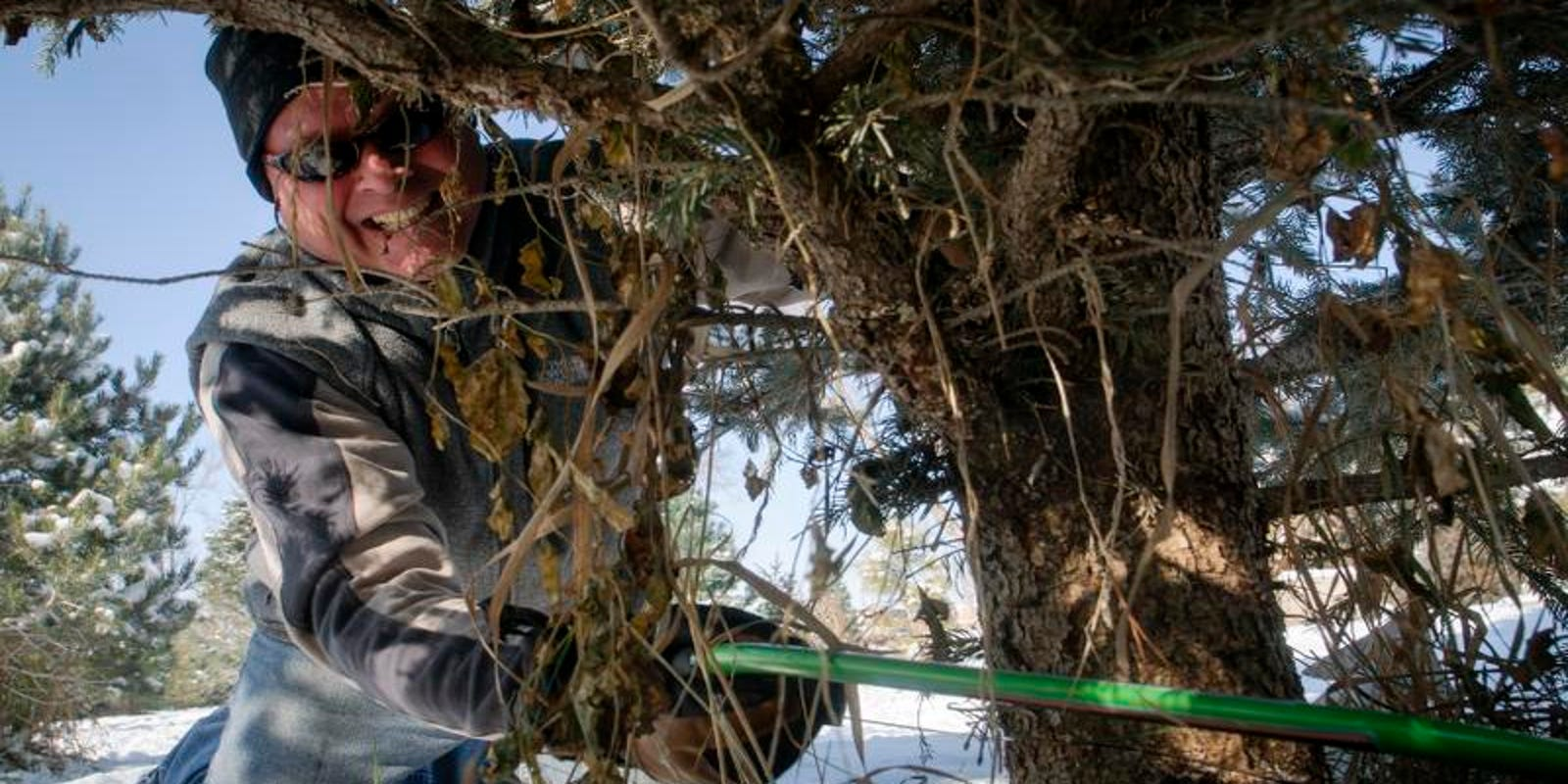 Where to get your Christmas tree in Northern Colorado this year
