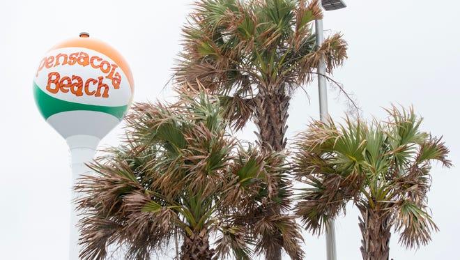 Palm trees near Casino Beach in Pensacola Beach on Monday, January 8, 2018.