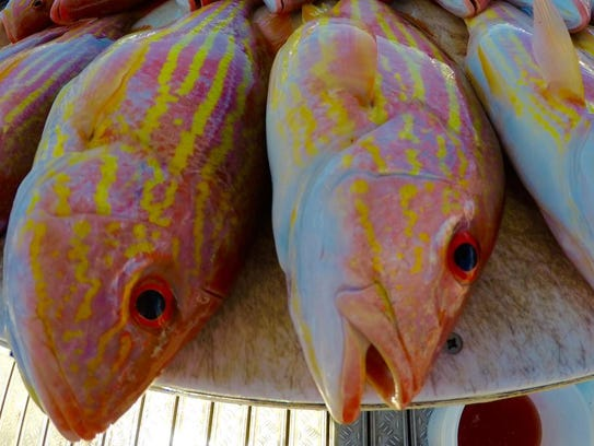 The 32nd annual Memorial Weekend Fishing Tournament is this weekend at Pirates Cove Resort & Marina in Port Salerno.